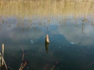 Ловля щуки в зарослях водной растительности