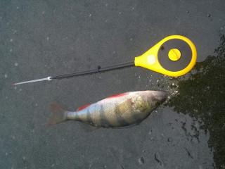 Первый лед рыбалка на окуня