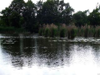 Перспективное мето для ловли щуки летом
